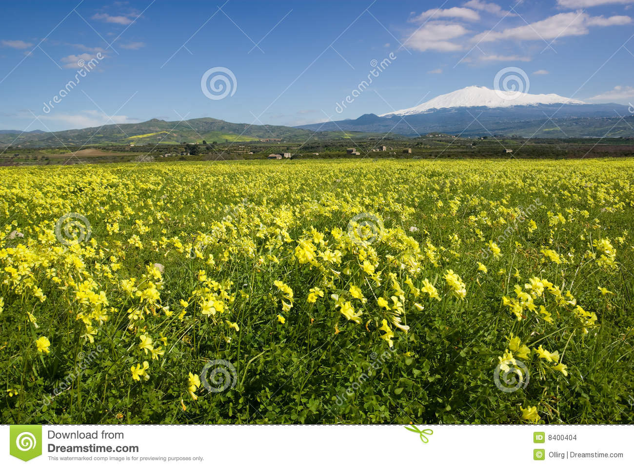 Meadow Of Yellow Clover In Flower Stock Photo Image Of Clouds