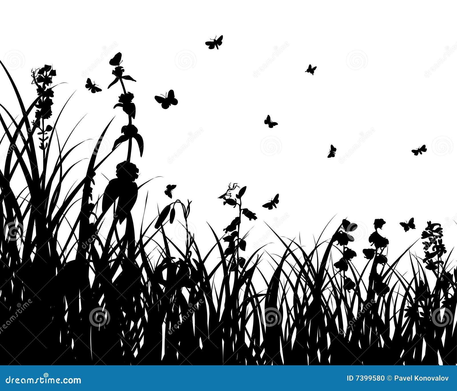 Butterfly Bush Shrub