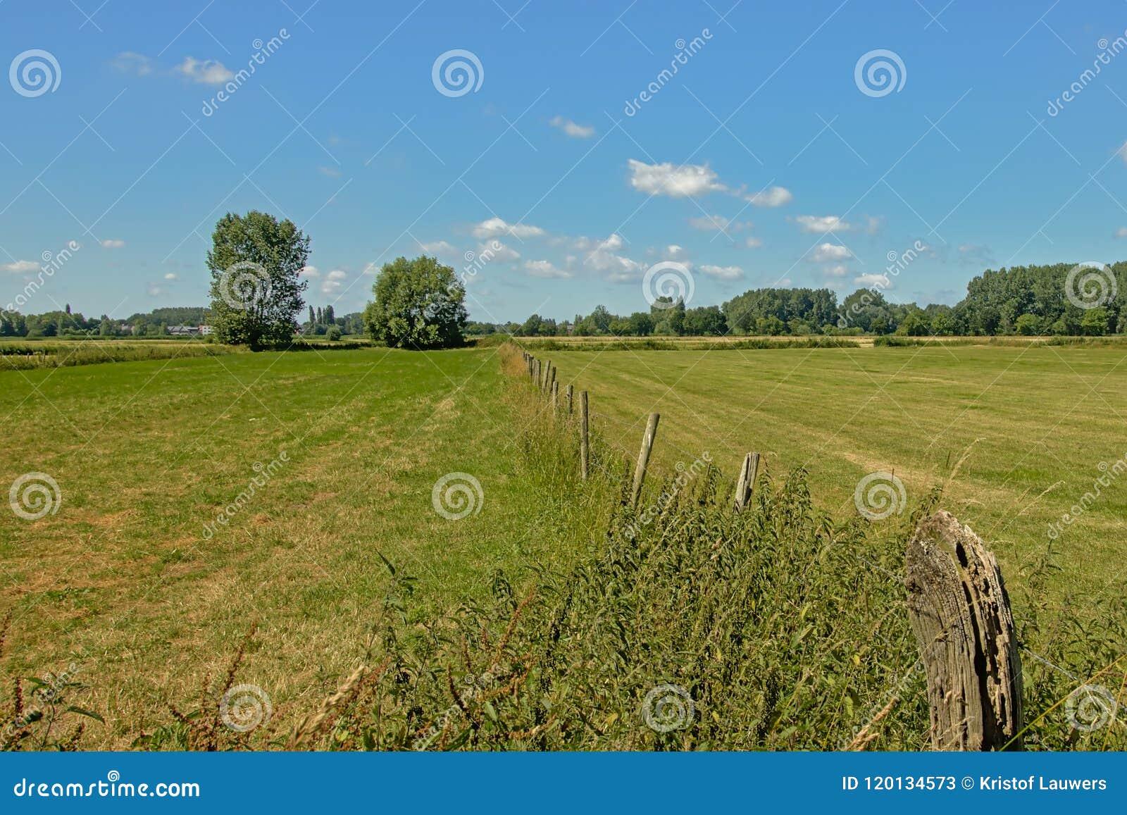 Meadows with trees under a clear blue sky in Kalkense Meersen nature reserve, Flanders, Belgium.