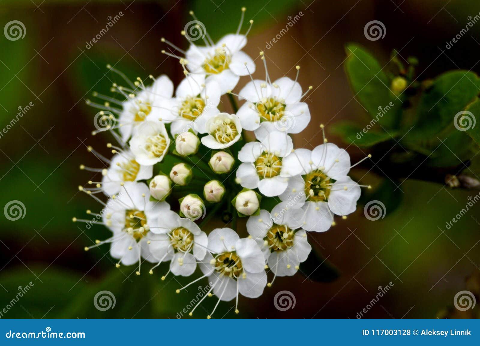 Meadowsweet森林小花束