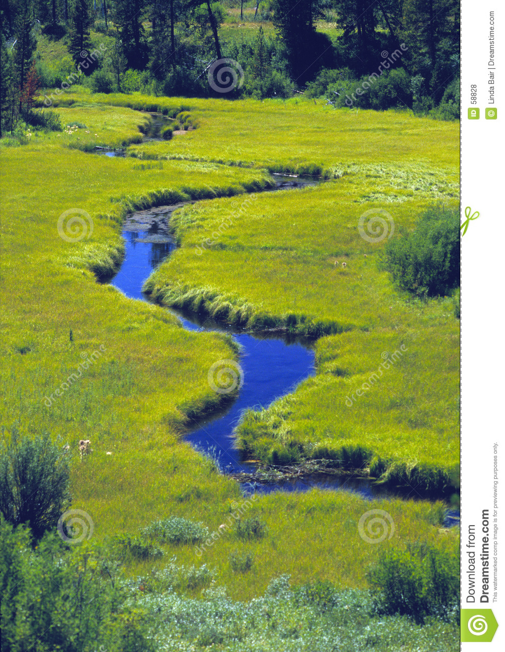 Meandering Stream Through A Meadow