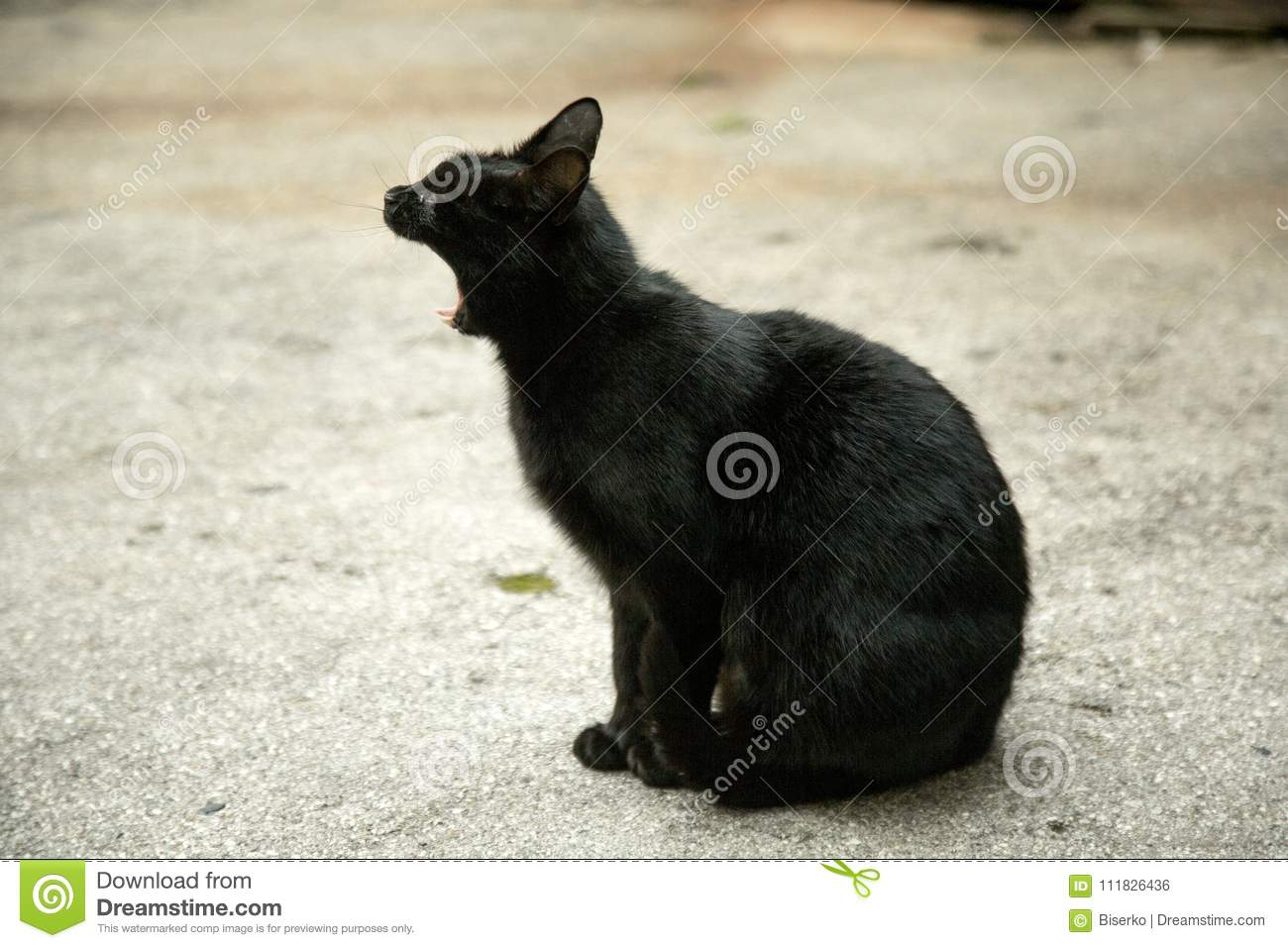 Meaning Of The Black Cat Symbol Stock Photo Image Of Domestic