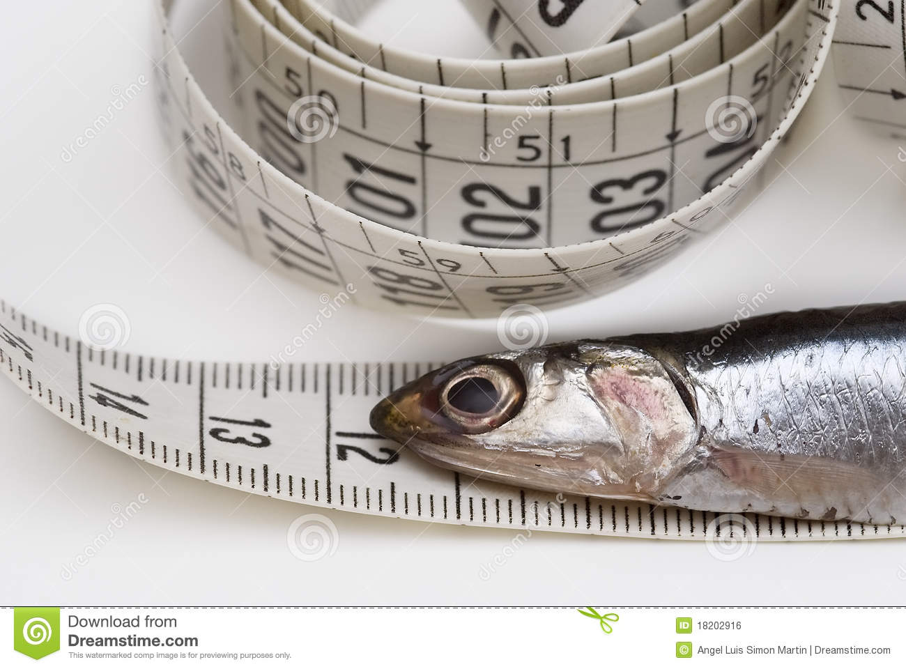Measuring tape and fish royalty free stock image image for Fish measuring tape