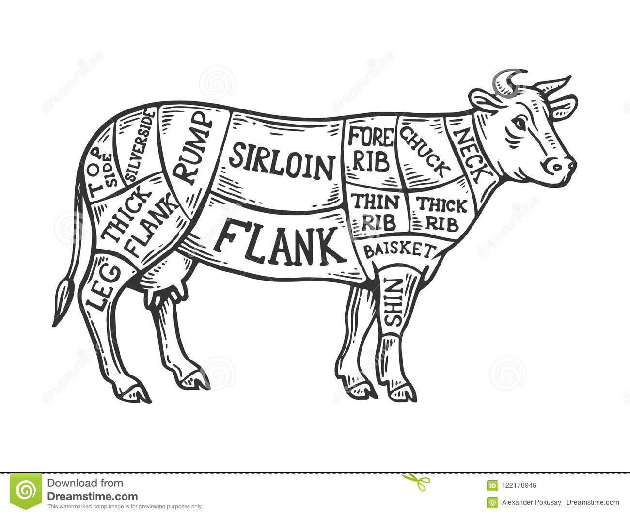 meat diagram cow engraving vector illustration scratch board style imitation black white hand drawn image meat diagram cow 122178946 meat diagram cow engraving vector stock vector illustration of