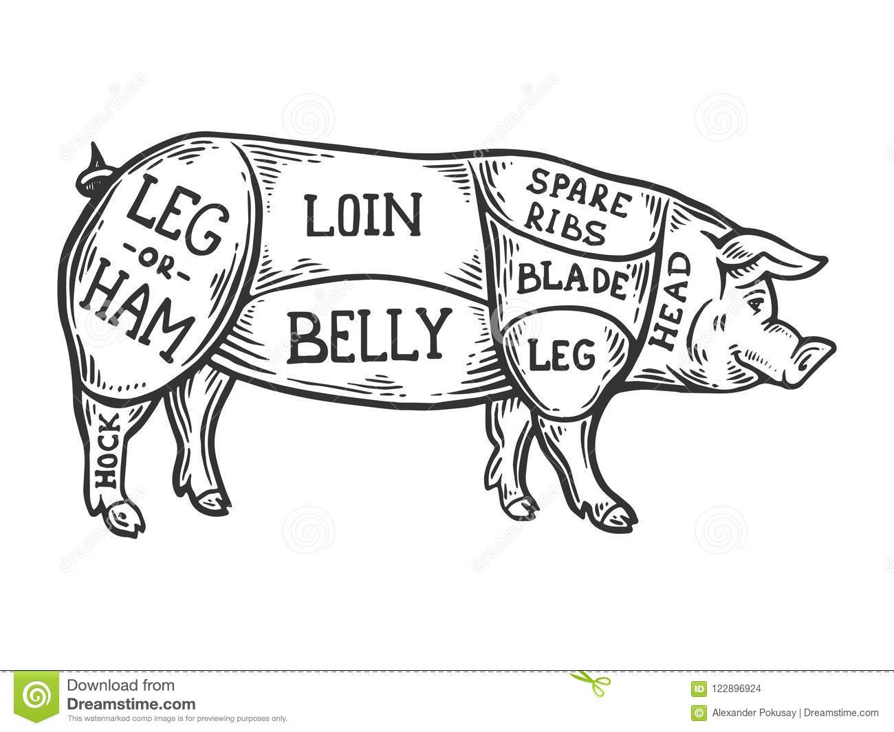 Meat Diagram Pig Engraving Vector Stock Vector Illustration of