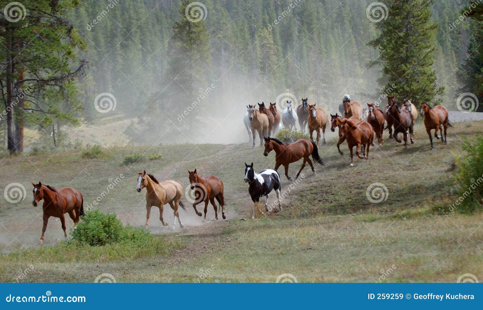 Mecanismo impulsor 1 del caballo