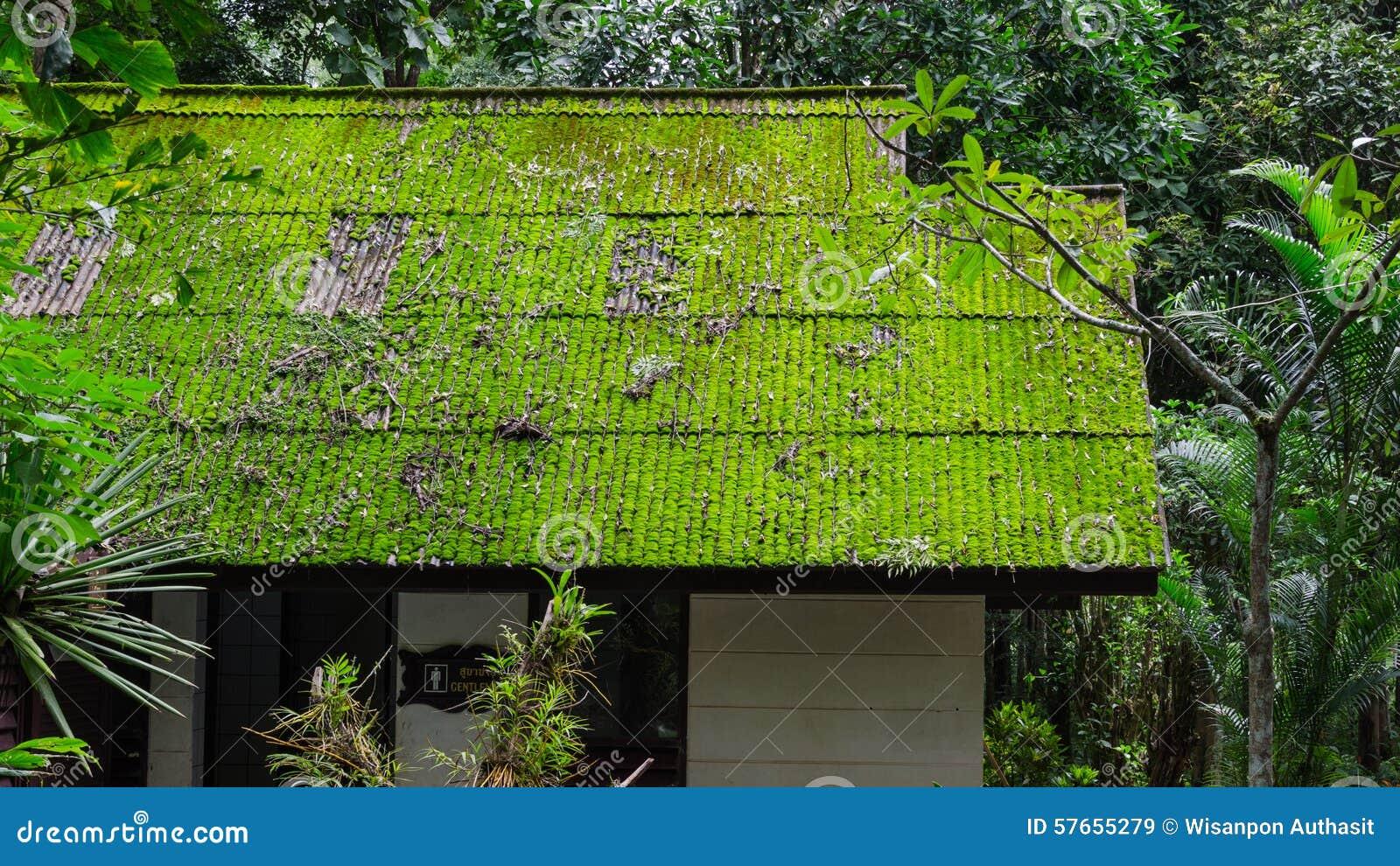 Mech dach w zielonym sezonie