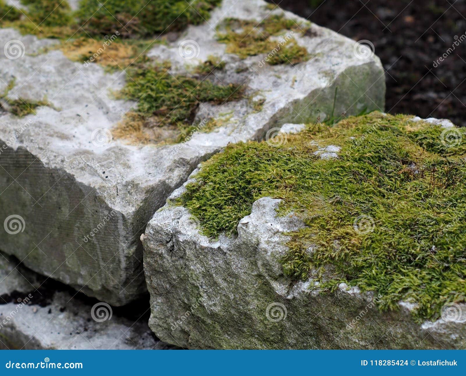 Mech dorośnięcie Na Kamiennych cegłach