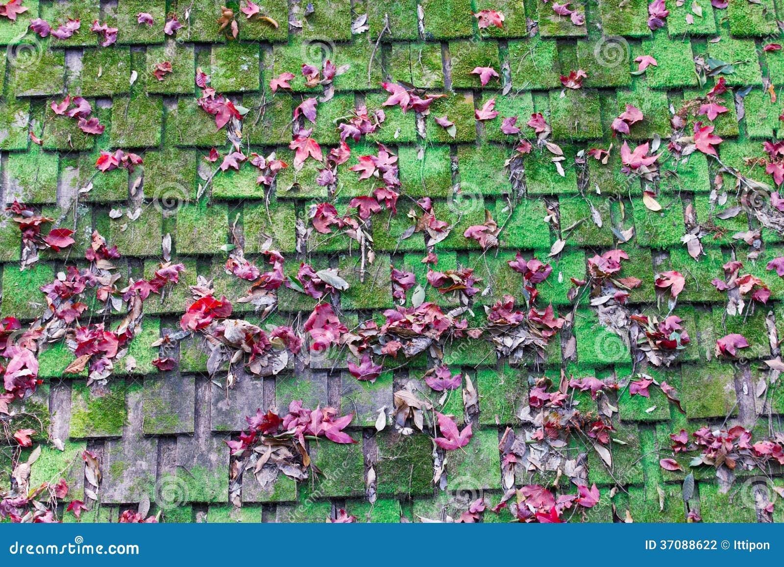 Download Mech i klon na dachu zdjęcie stock. Obraz złożonej z szczegółowy - 37088622