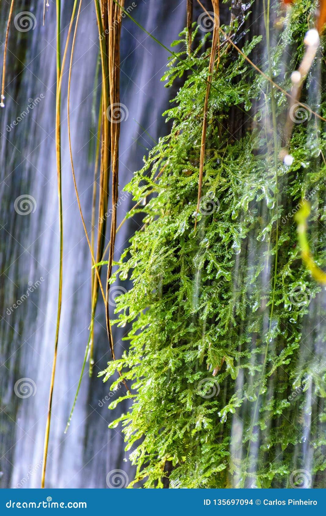 Mech i roślinność między kamieniami jasna siklawa i wodami