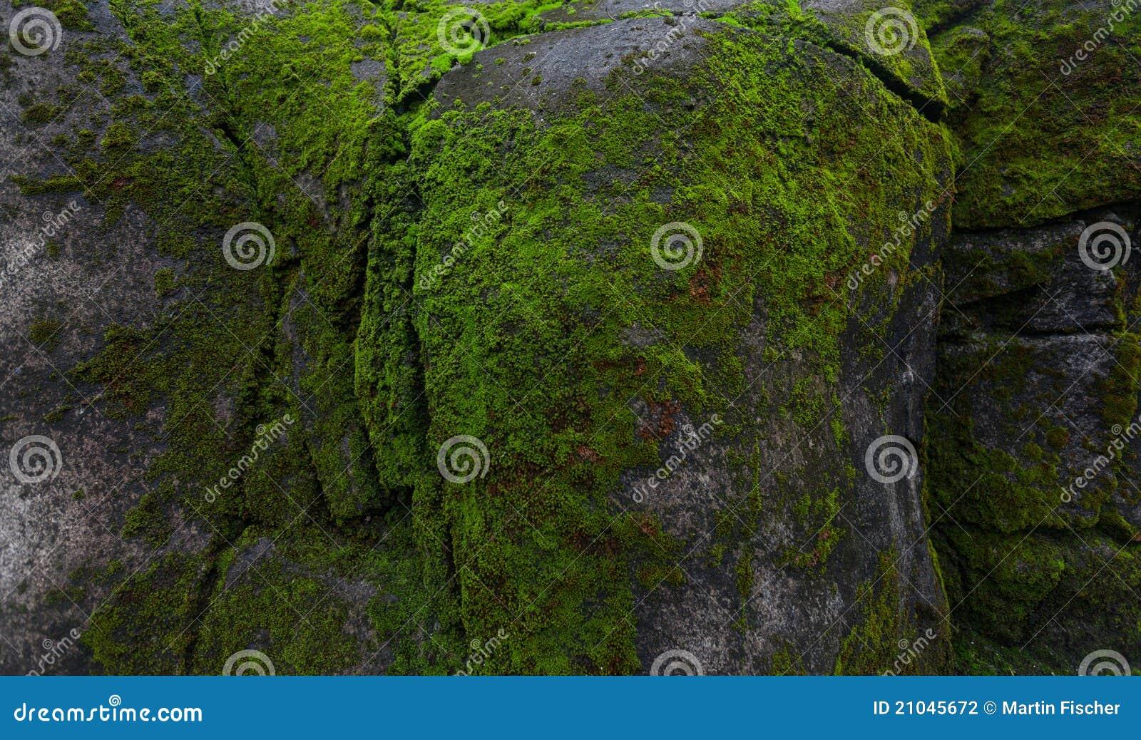 Mech zielona skała