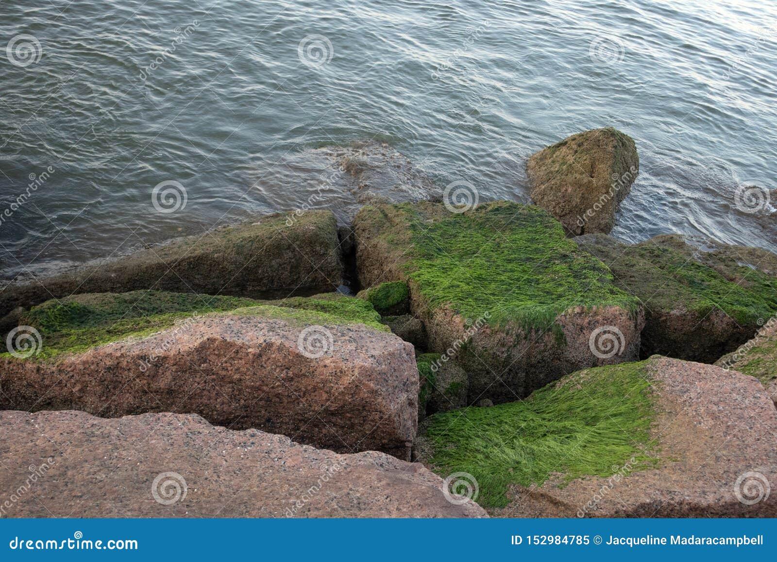 Mechaci głazy na brzeg prowadzi woda