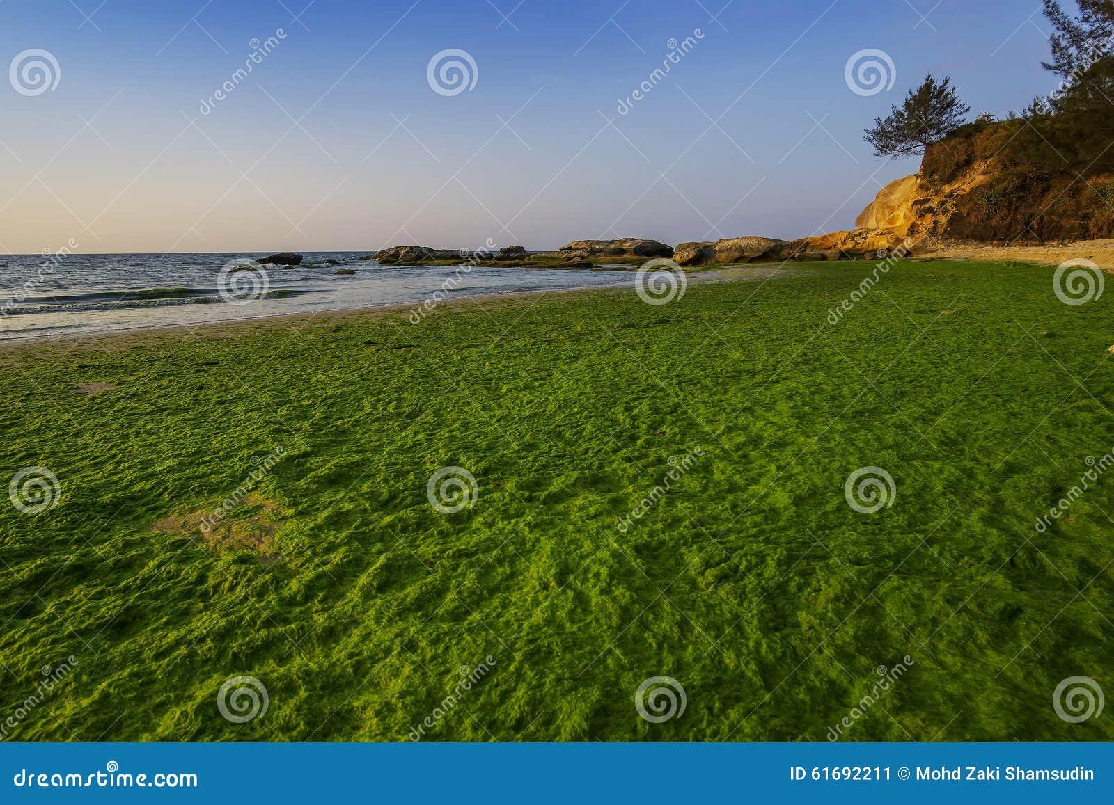 Mechaty sezon przy plażą w Kudat, Sabah, Wschodni Malezja, Borneo
