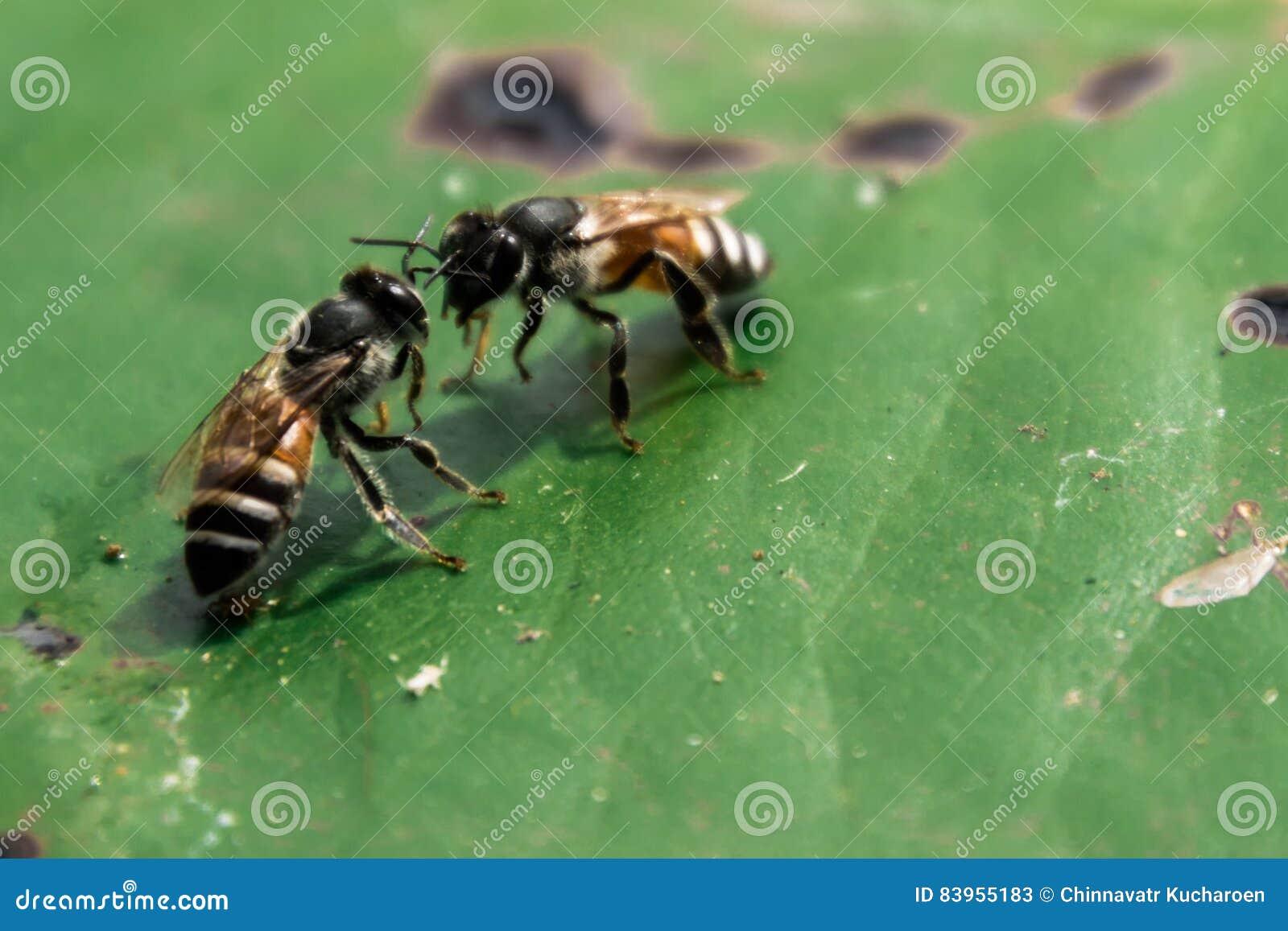 Mededeling van bijen