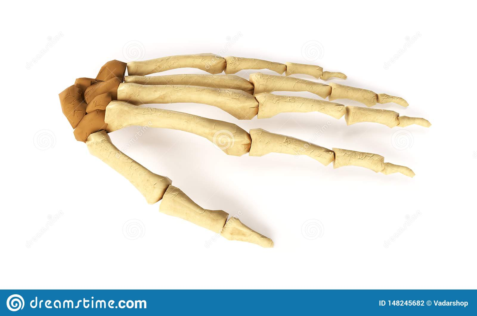 Medical accurate 3d illustration of the hand bones