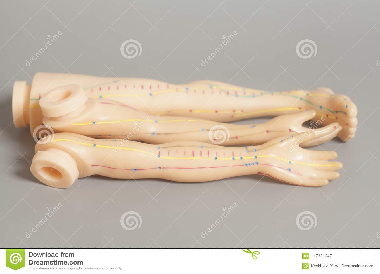Human Body Parts Stock Photos - Royalty Free Images
