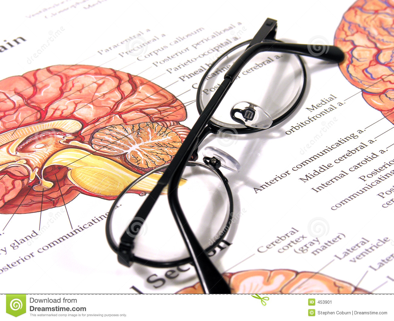 Download Medical Chart and Glasses stock image. Image of intelligence - 453901