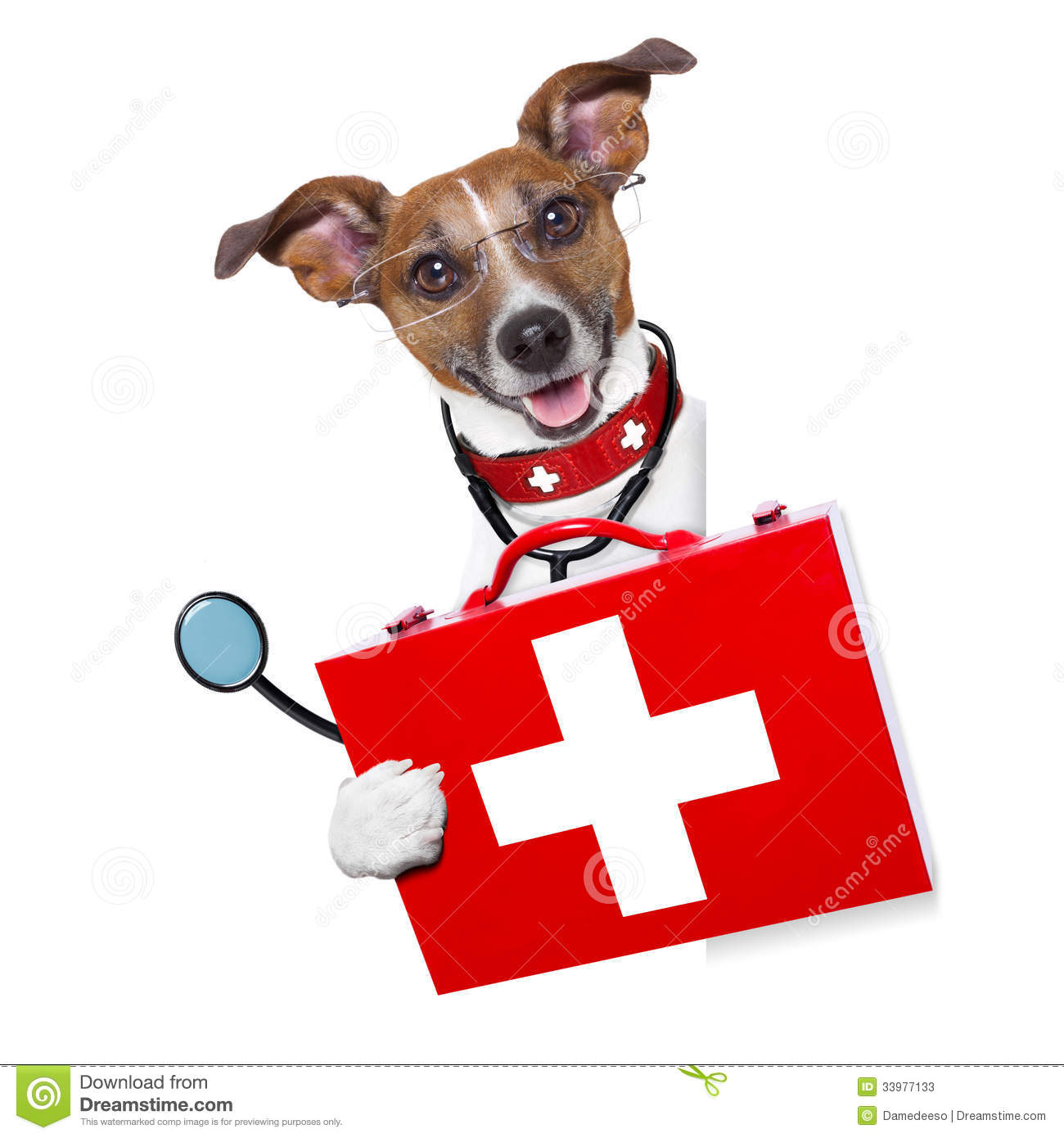 Medical Doctor Dog Stock Photos - Image: 33977133