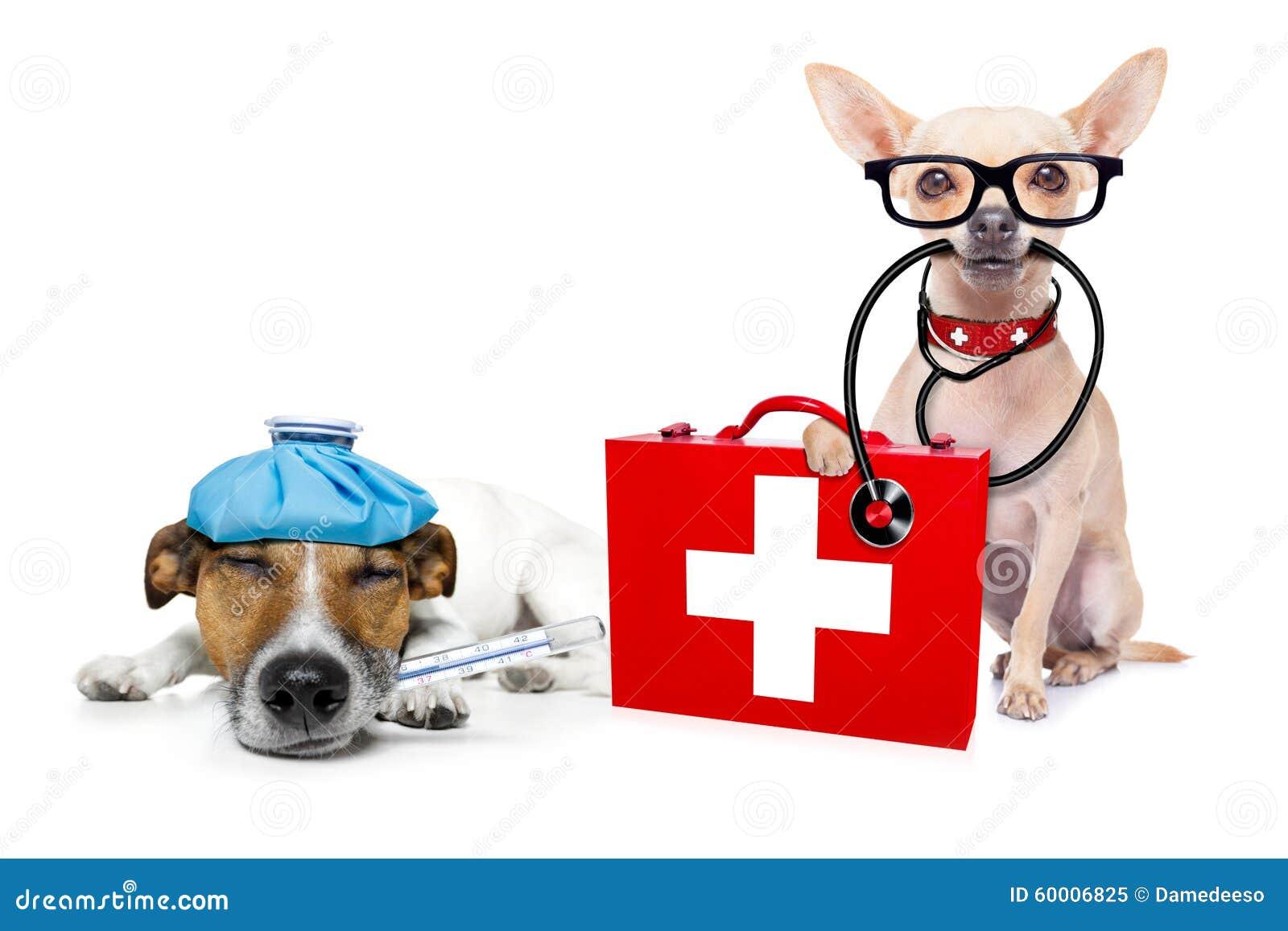 Animal Health Veterinary Medicine Autos Post