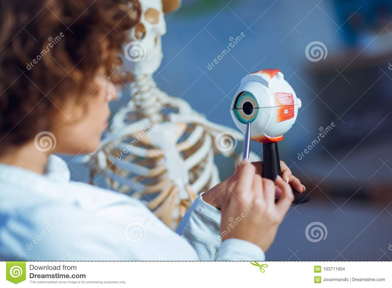 Doctor Woman Teaching Anatomy Using Human Eye Model Stock Photo ...