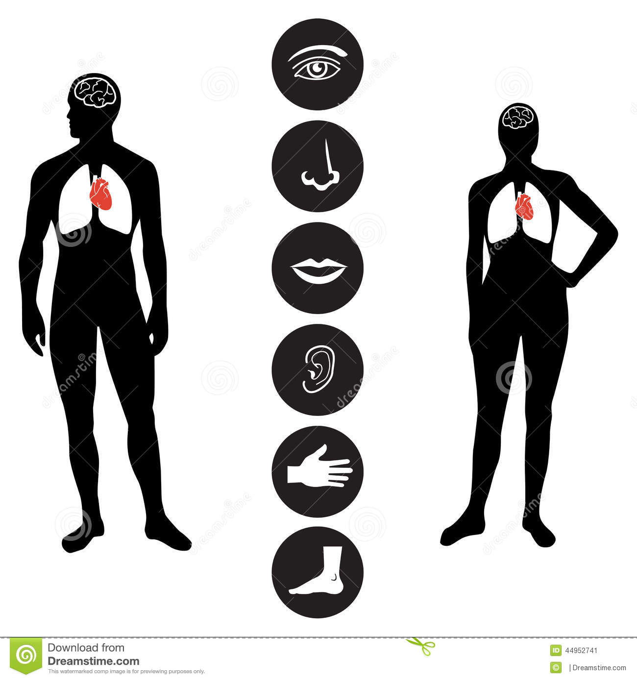Medical Human Body Part Icon Stock Vector Image 44952741