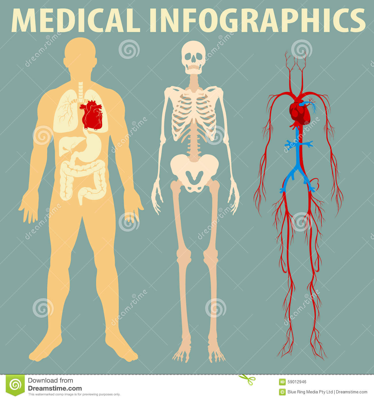 Medical Infographic Human Body Stock Vector Illustration Of