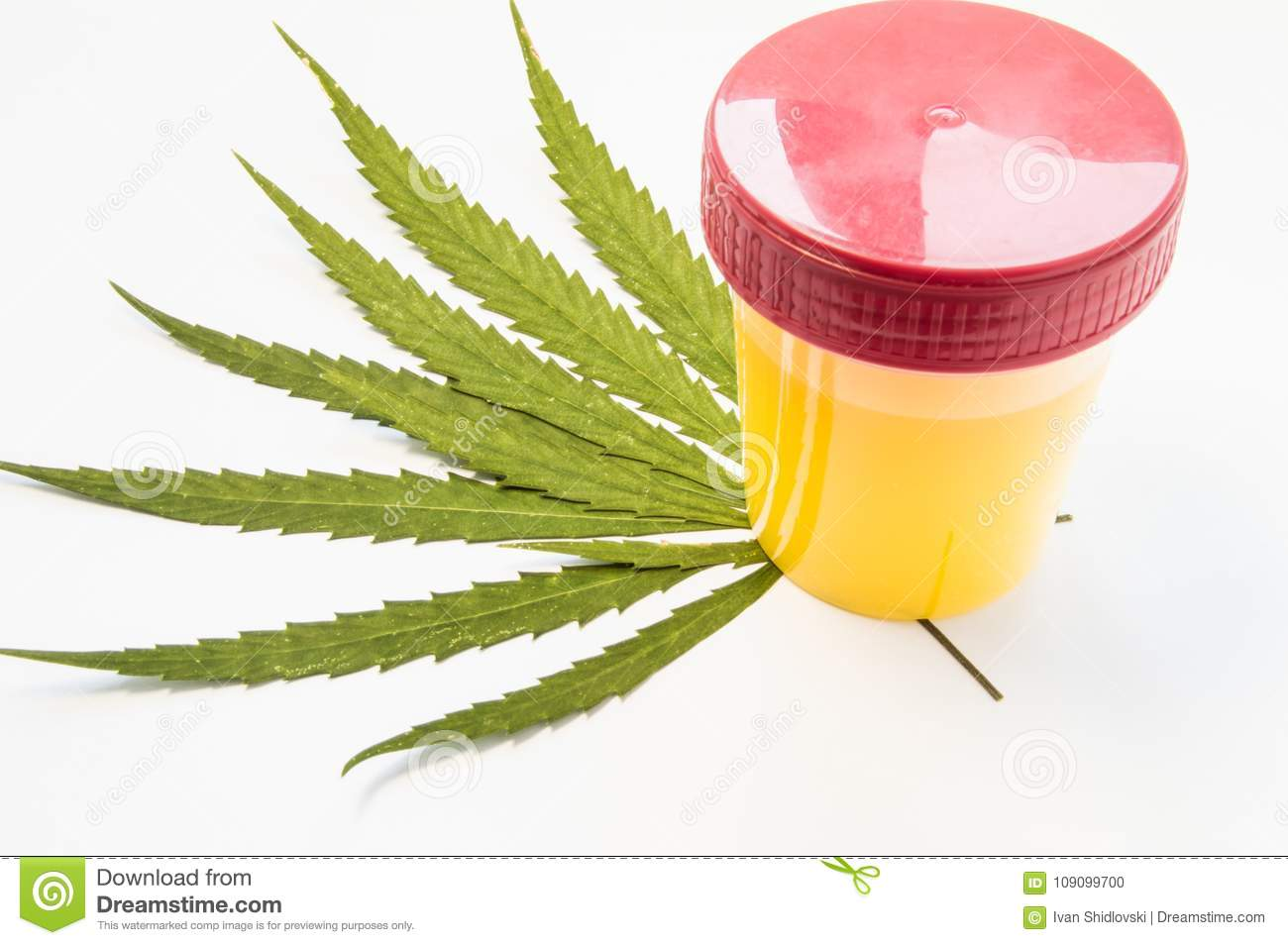 Medical Laboratory Container With Urine Sample Rests On Green Leaves
