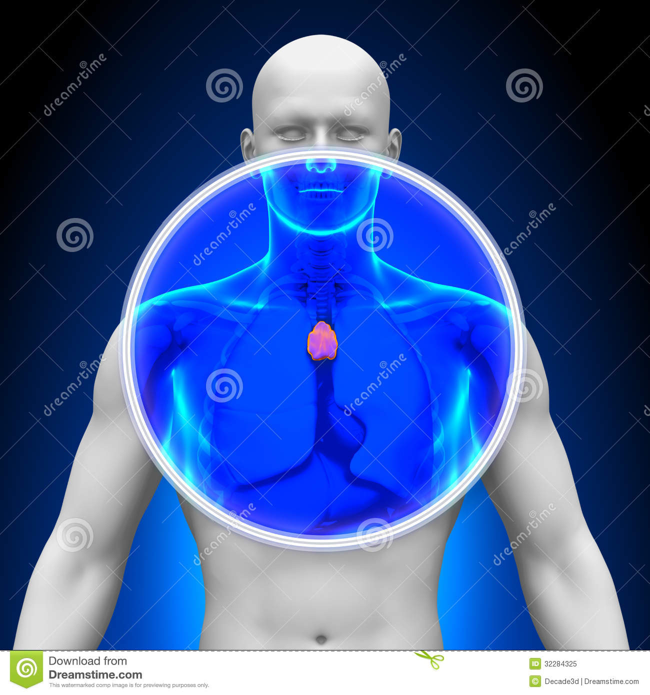 Royalty Free Stock Photo Medical X Ray Scan Thymus Imaging Image32284325