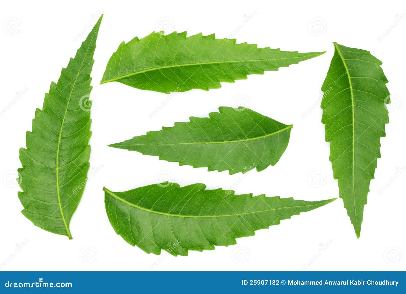 herb business plan