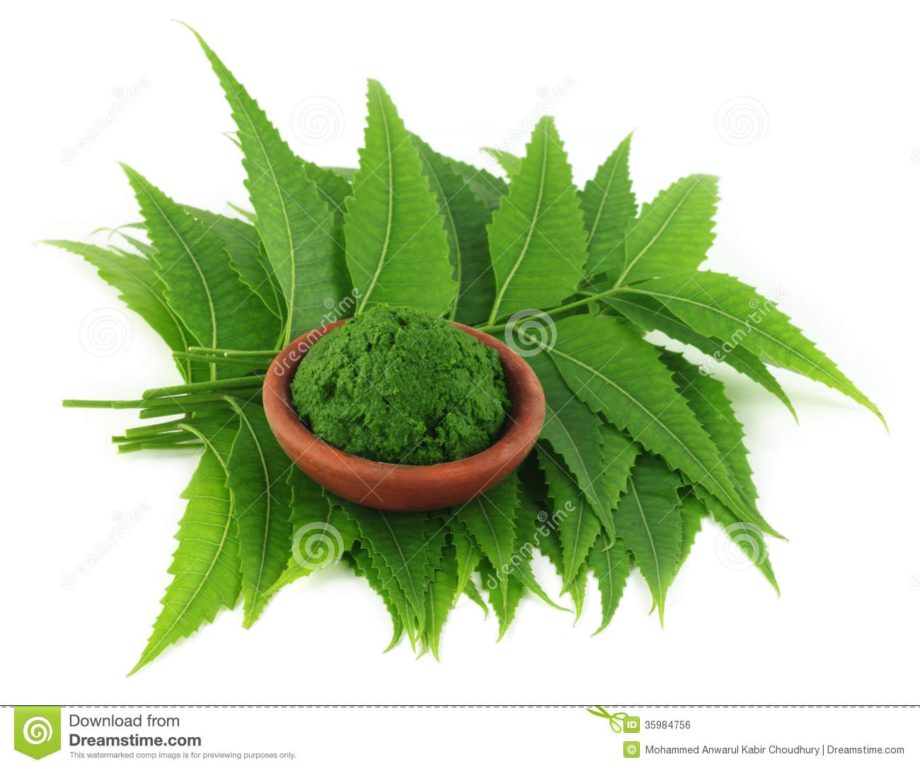 medicinal neem leaves with paste stock photo image 35984756. Black Bedroom Furniture Sets. Home Design Ideas