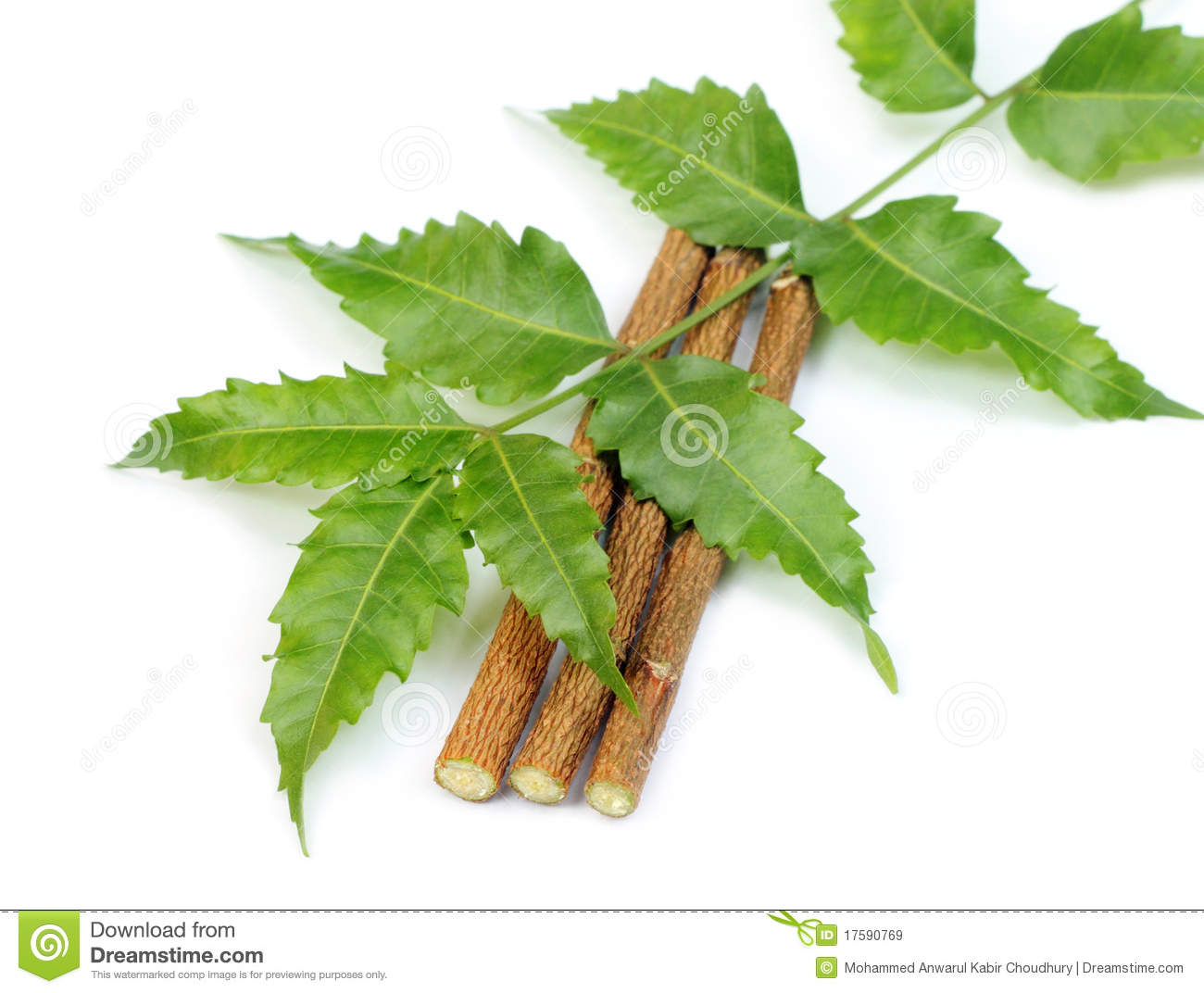 medicinal neem leaves with twigs royalty free stock images image 17590769. Black Bedroom Furniture Sets. Home Design Ideas