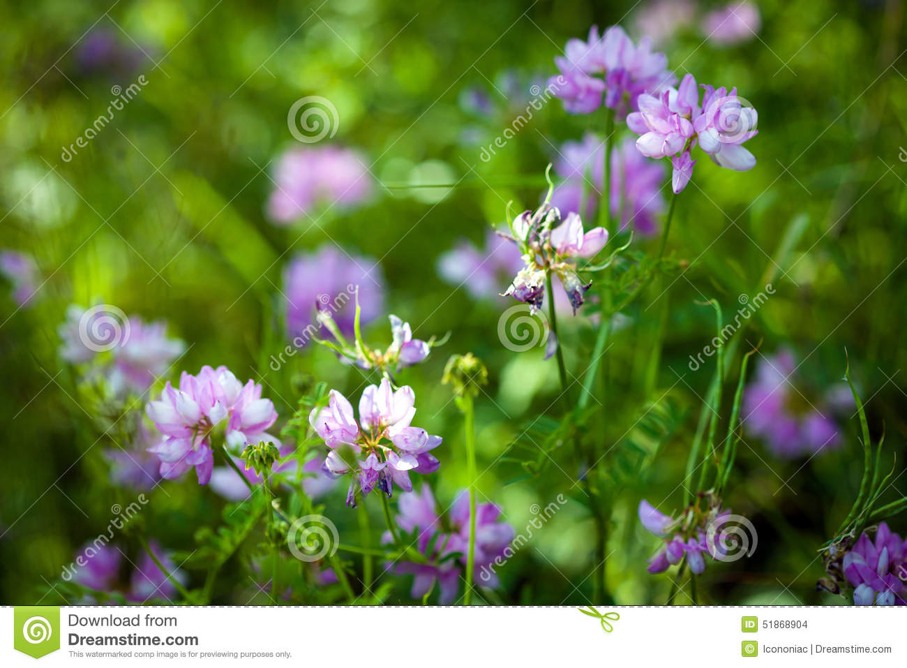 Medicinal Wild Spring Flowers Field Stock Photo Image Of Color
