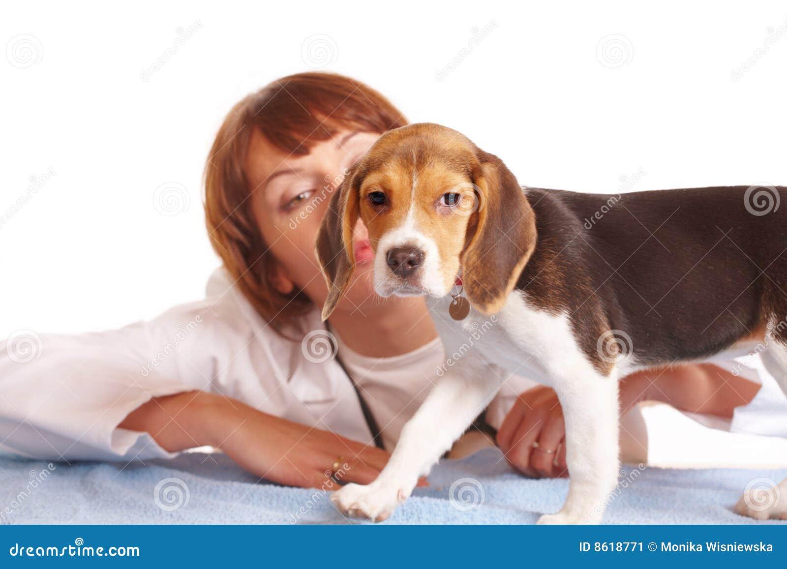 Medico veterinario e un cucciolo del cane da lepre