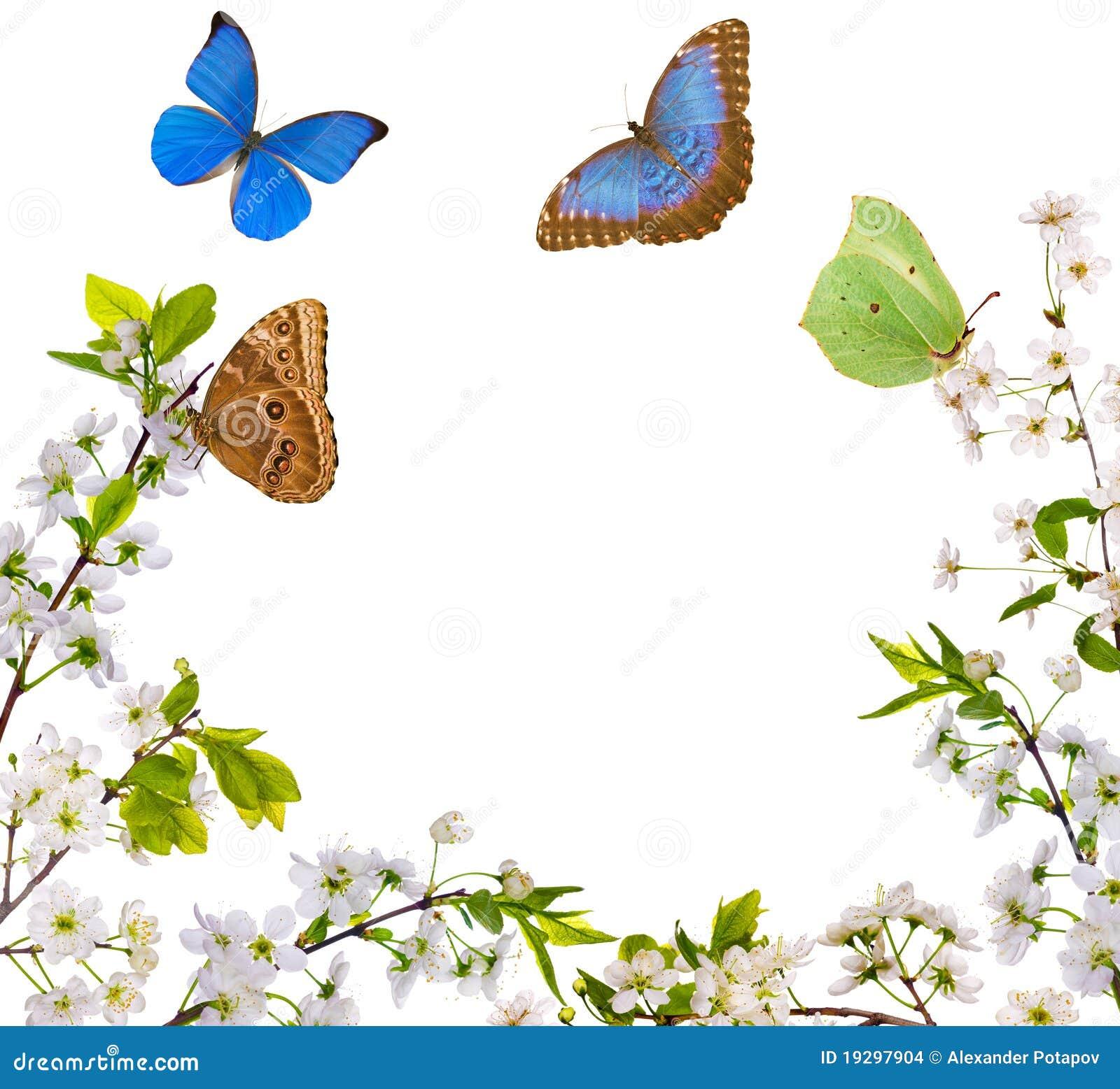 Imagenes de archivo: Medio marco y mariposas de las flores blancas
