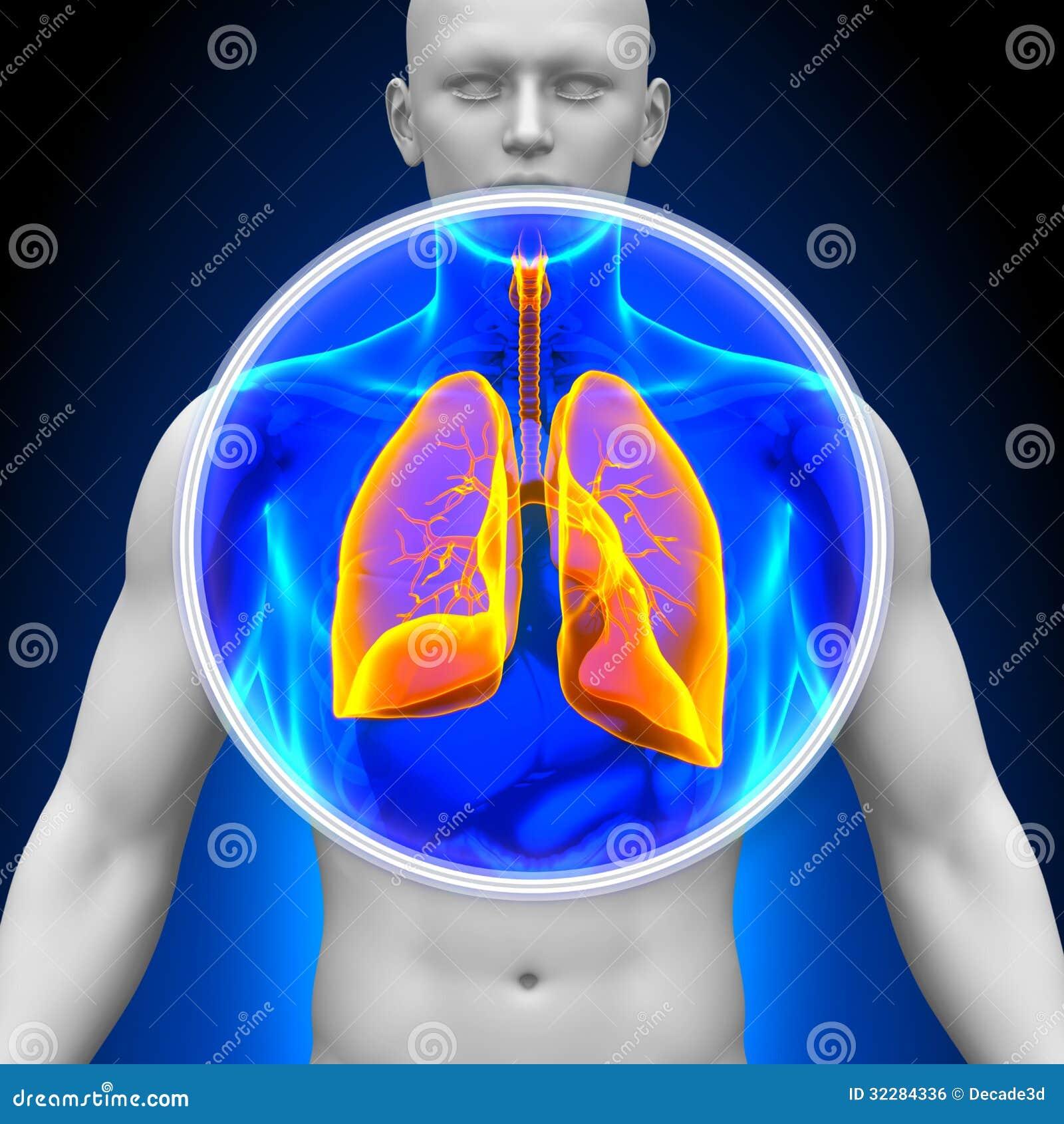 Medisch Röntgenstraalaftasten - Longen