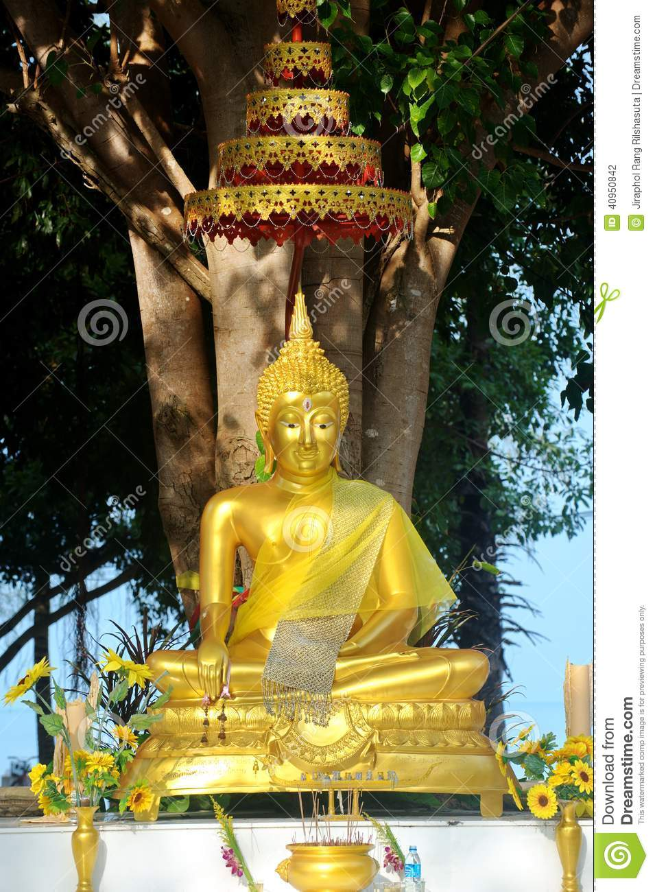 buddha image under bodhi tree royalty free stock image