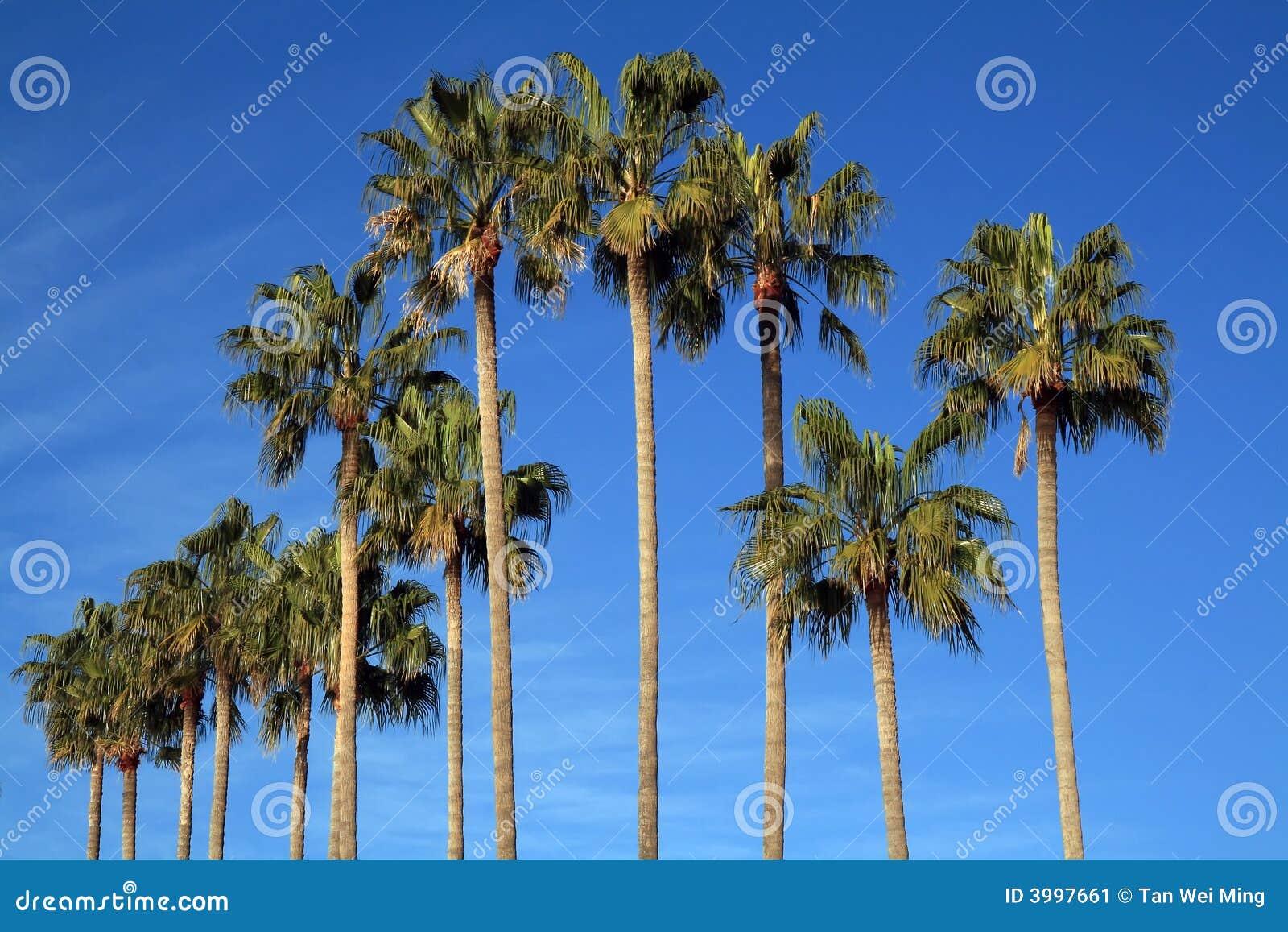 Mediterrane Palmen