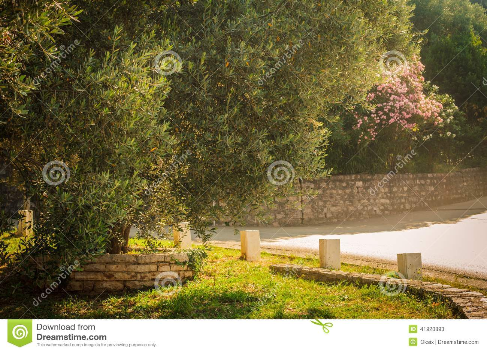 Mediterrane tuin, close-up de tak
