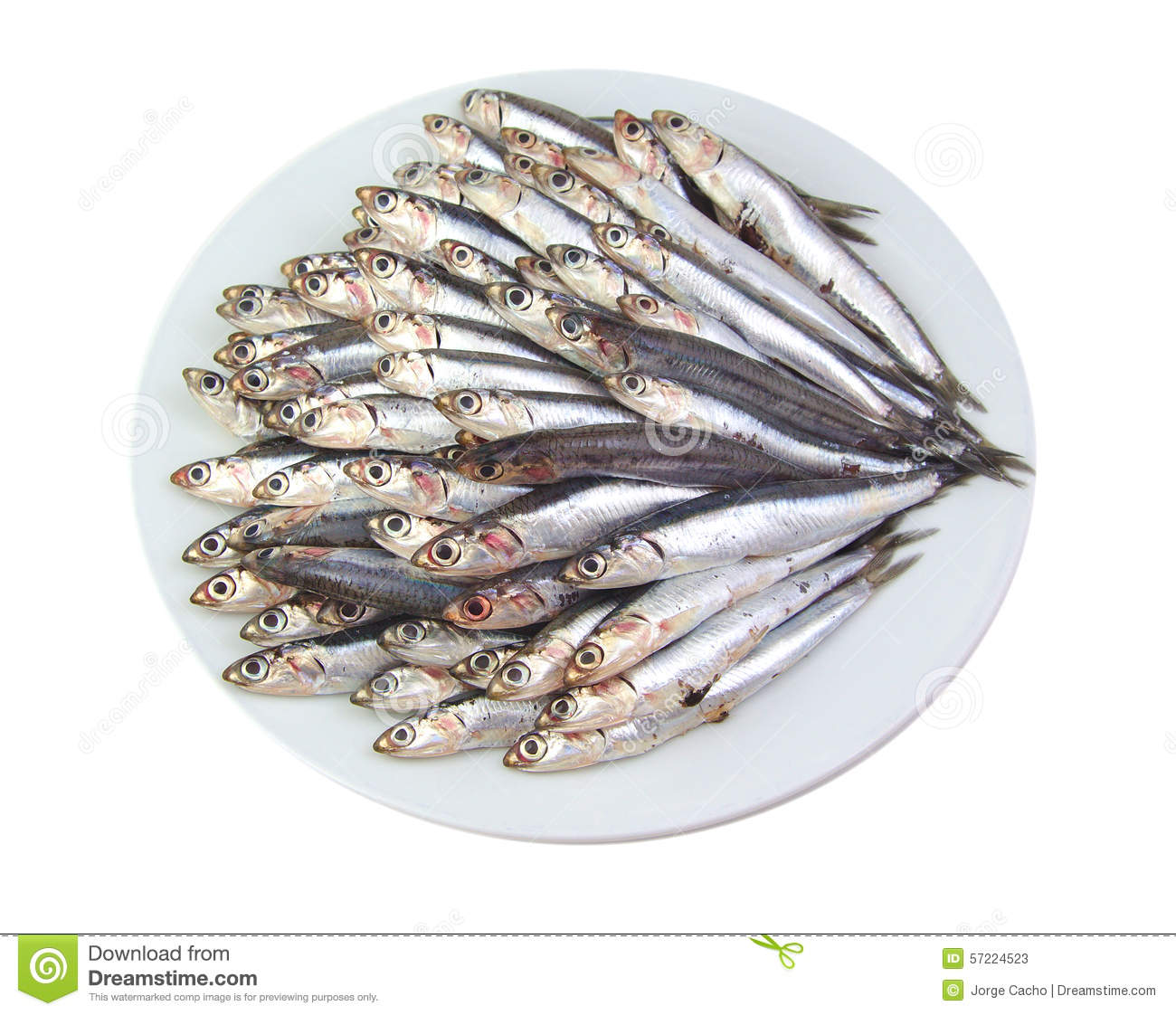 Mediterranean Anchovies Isolated On A White Stock Photo ...