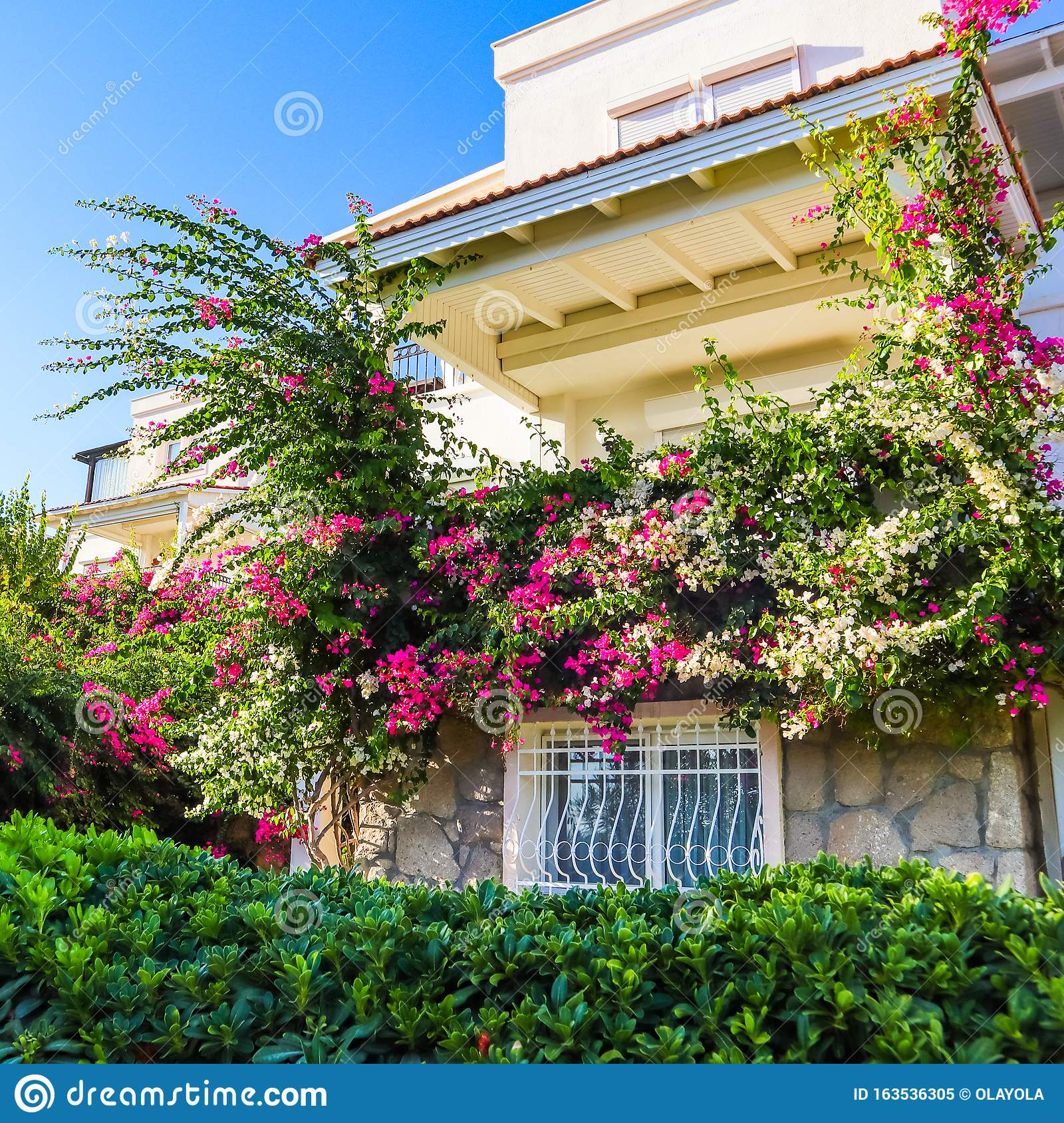 Mediterranean Plants In The Garden And Beautiful Pink And White