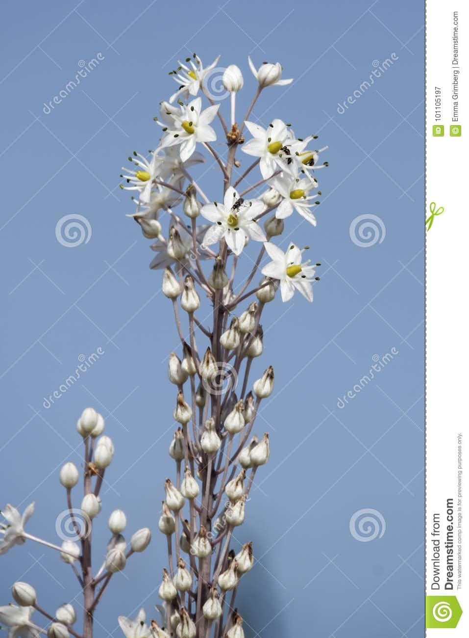 Mediterranean Sea Bow With Little White Flowers Close Up Stock