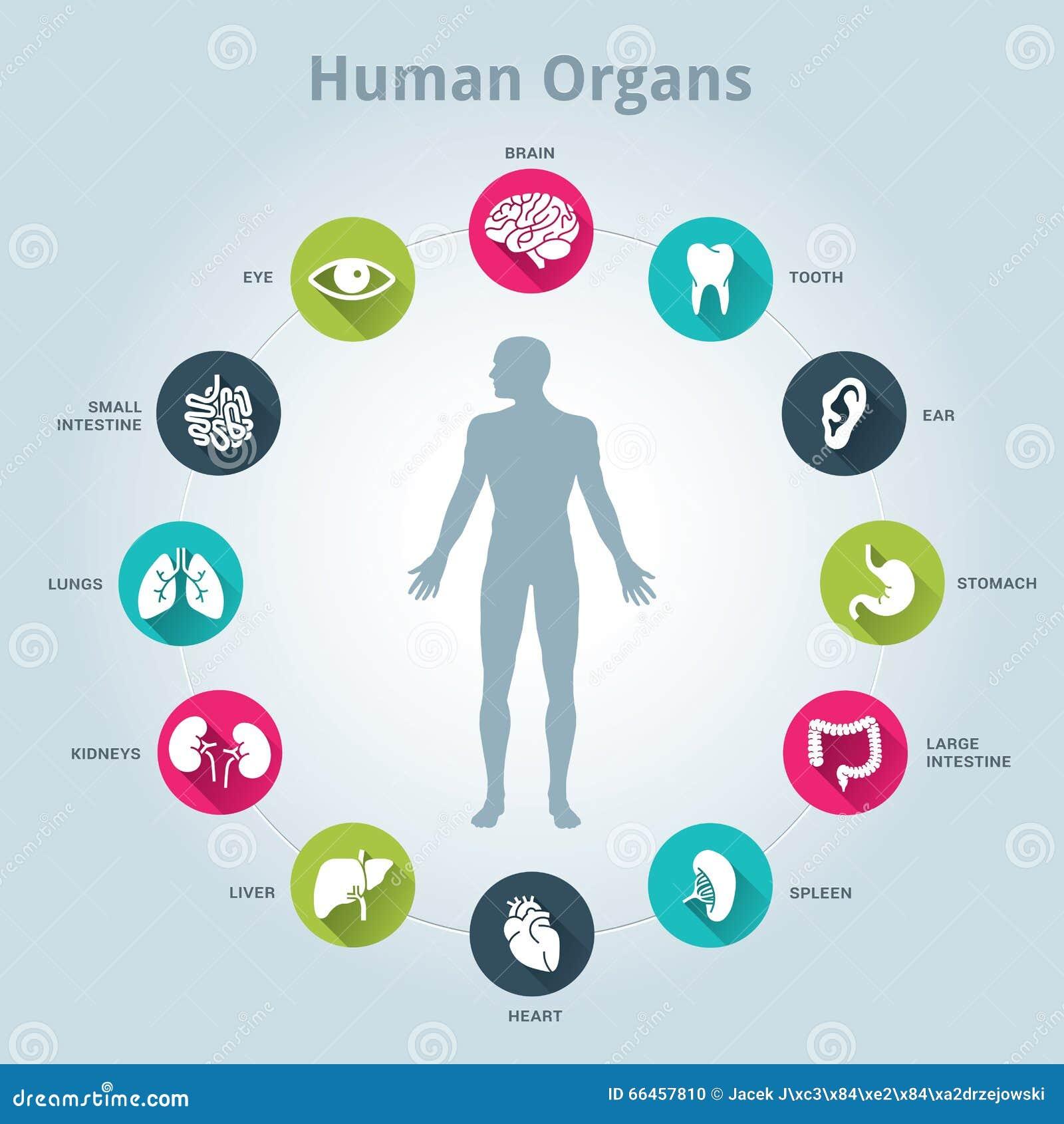 Medizinische Ikone der menschlichen Organe stellte mit Körper in der Mitte ein