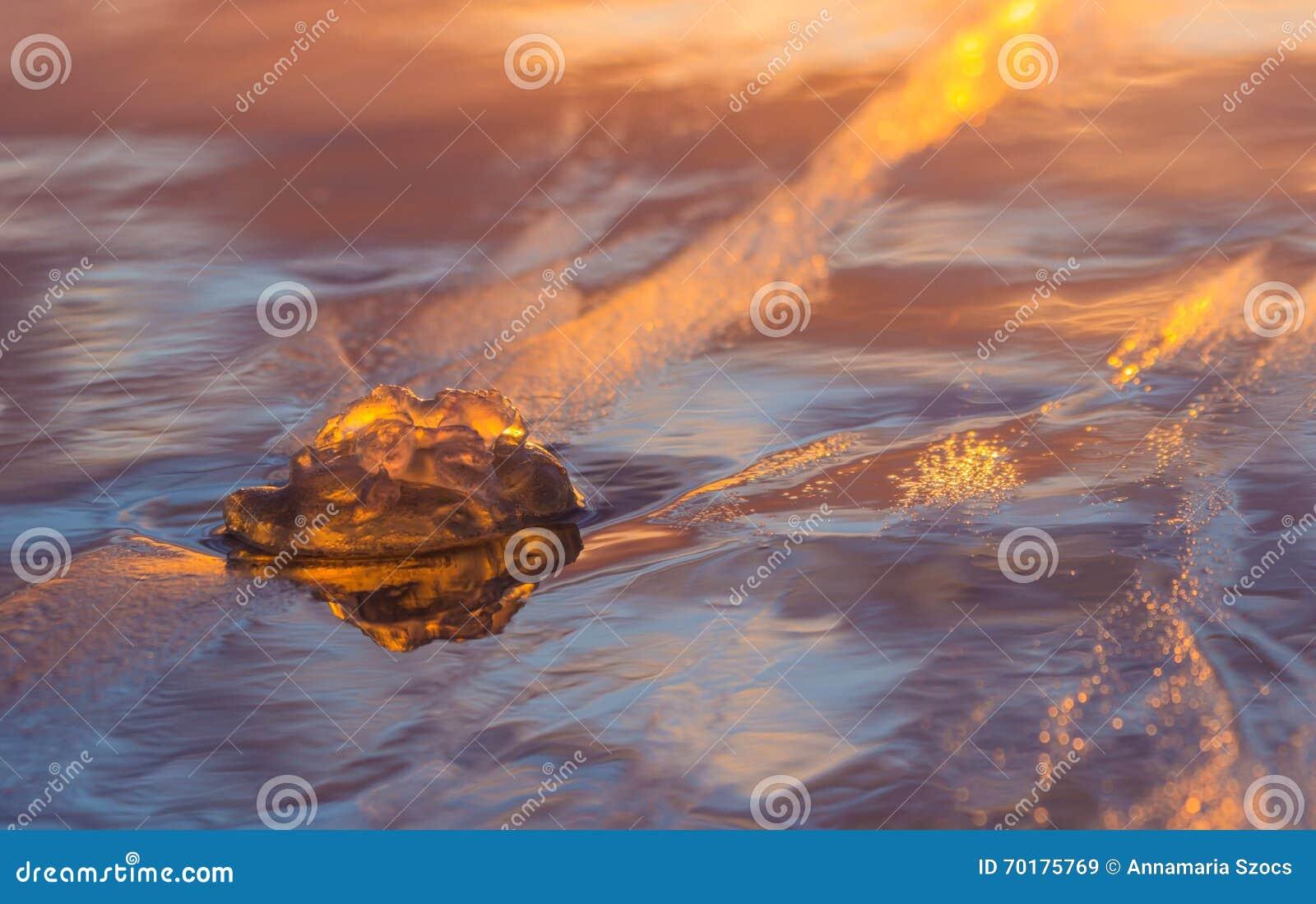 Medusa i solnedgång