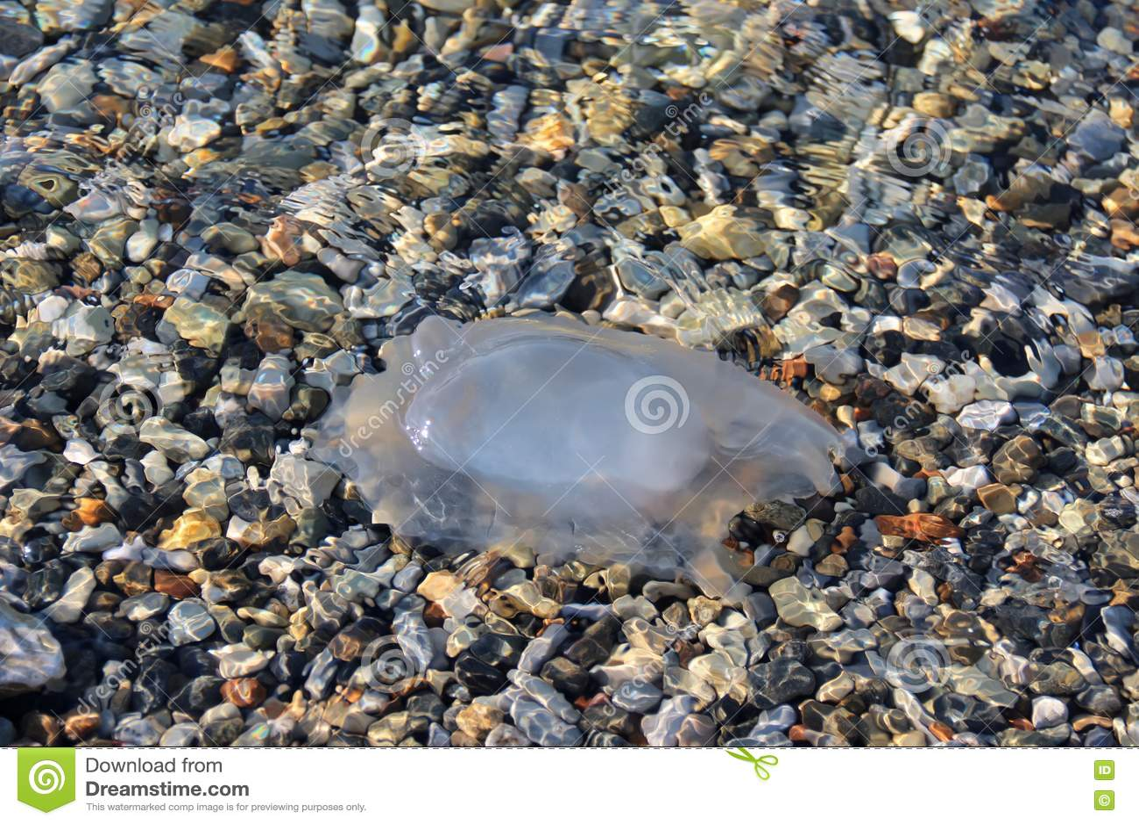 Medusa no mar