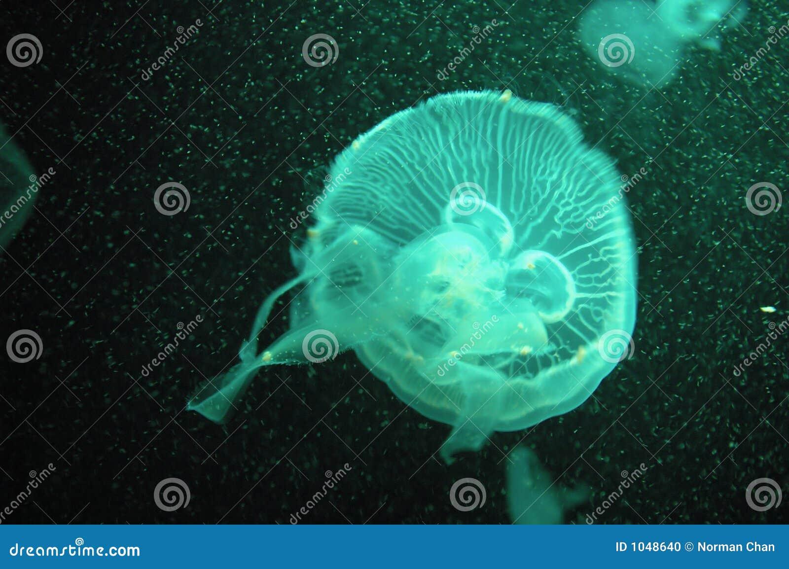 Medusa verdes