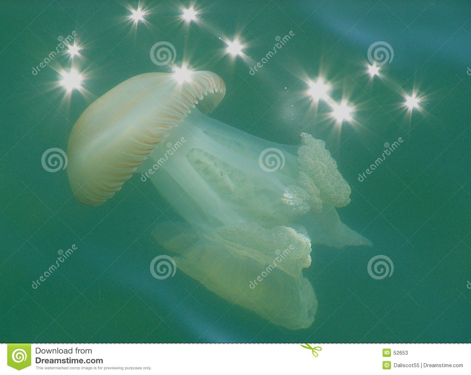 Medusas iluminadas