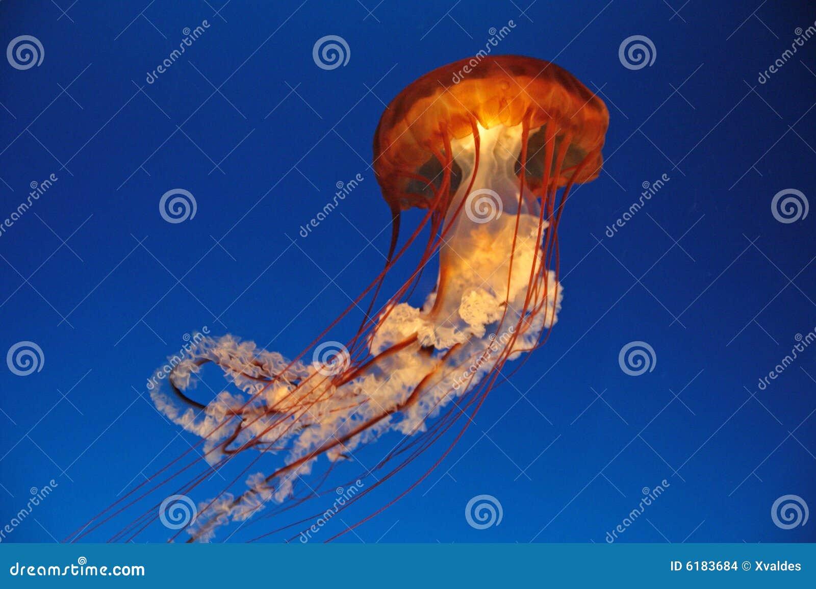 Meduza.
