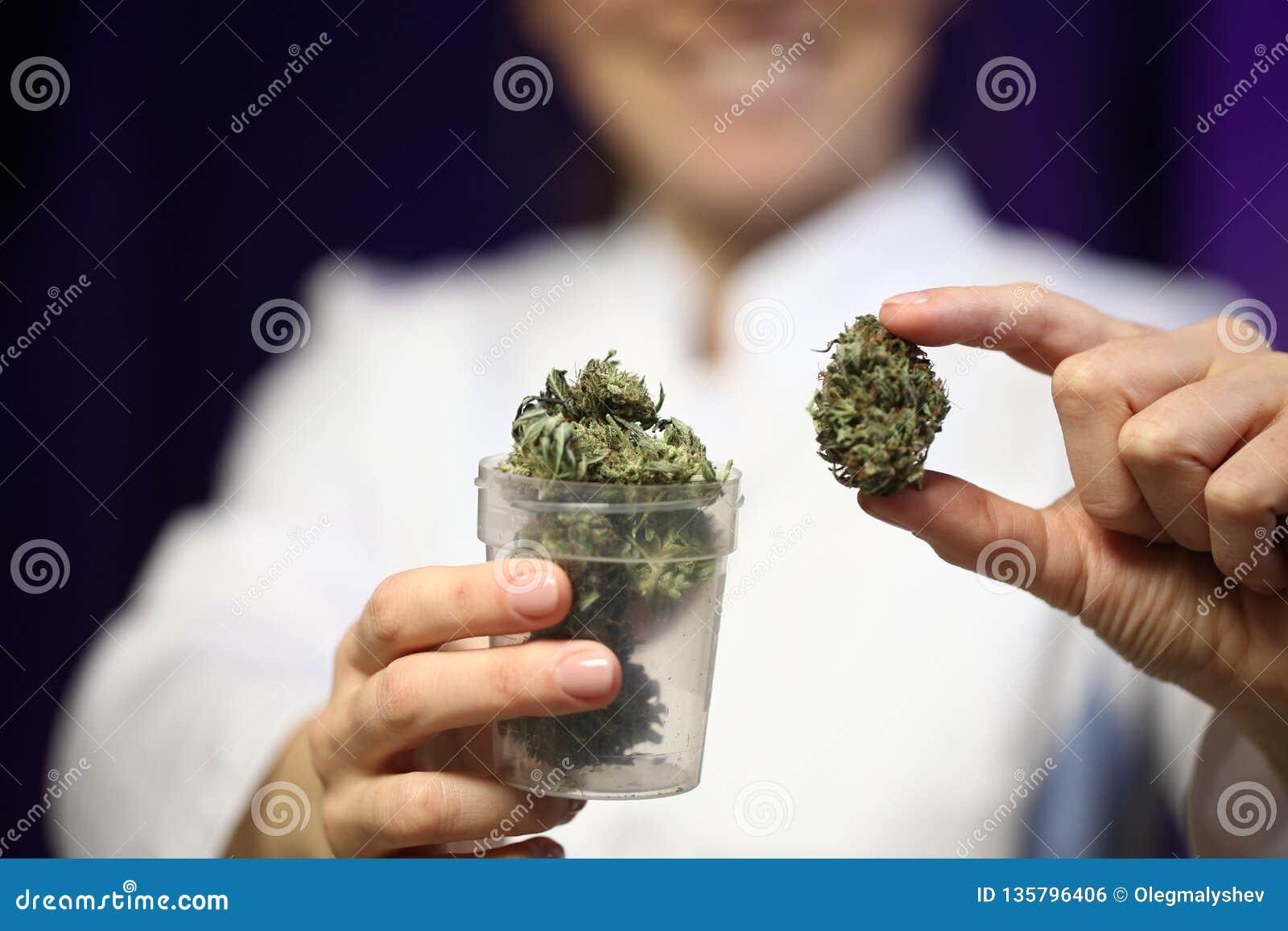 Medyczna marihuana w ręce lekarka marihuany alternatywna medycyna
