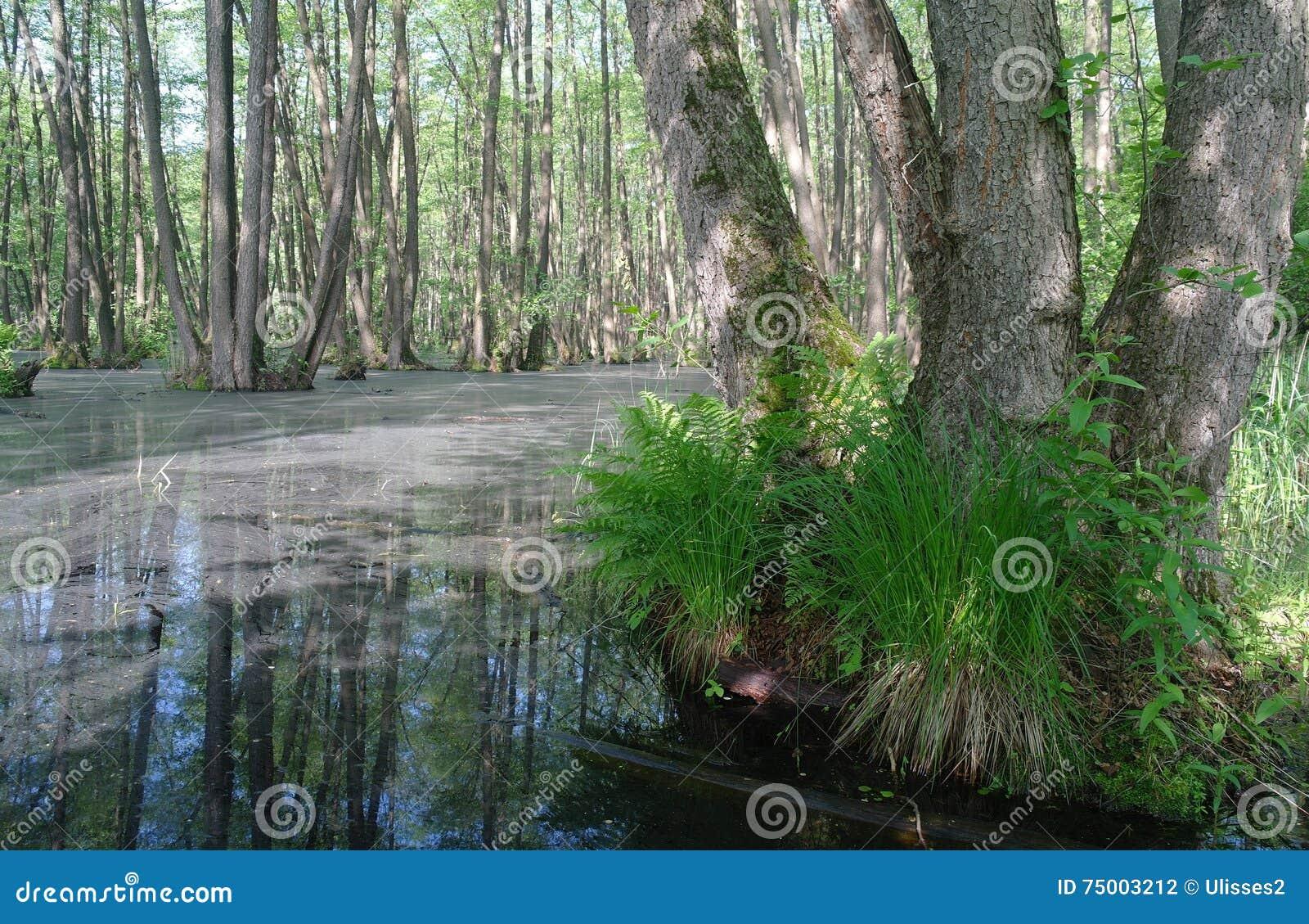 Meer in houten groen en bomen