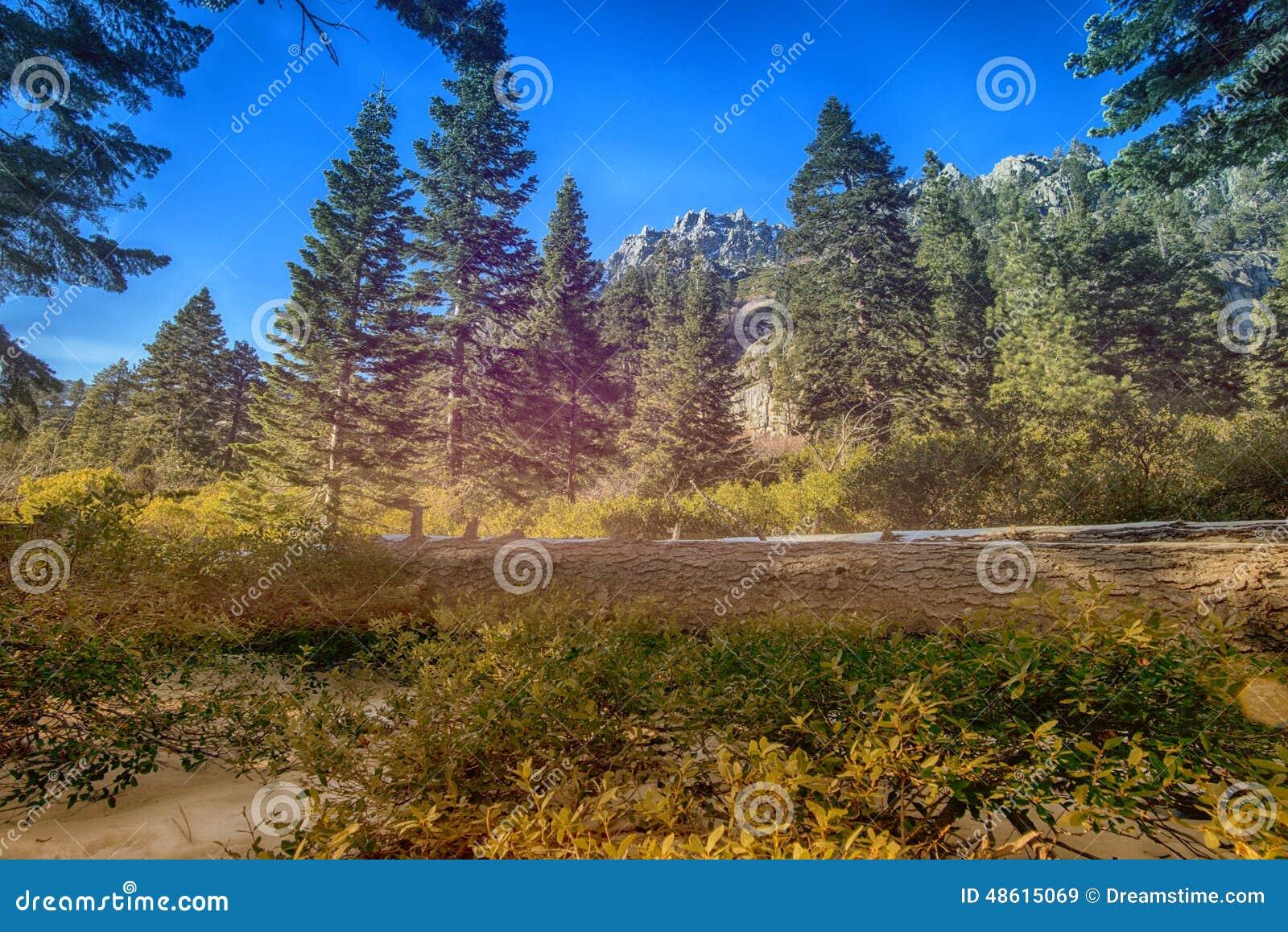 Meer Tahoe Forrest